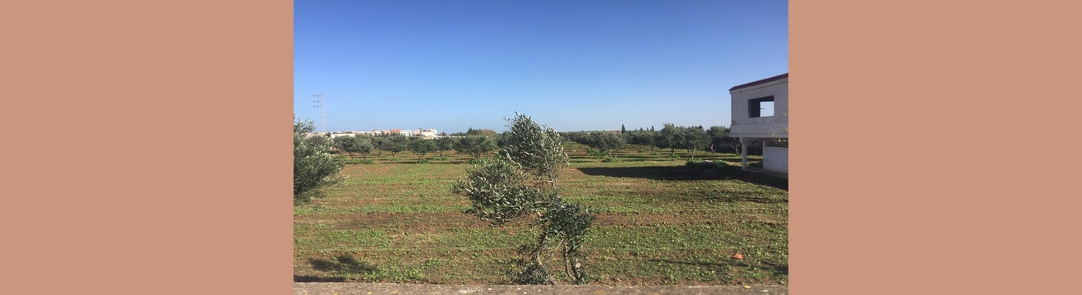 Terrain «El Rahma» ( AO 03/2020)