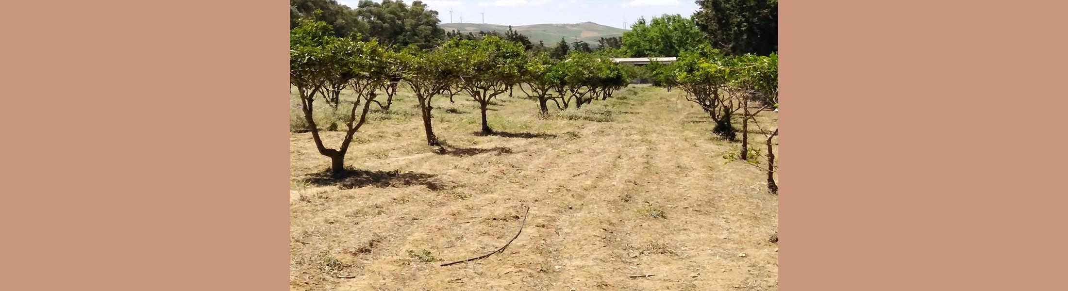 Terrain Ras Djebel 2 - Bizerte (Appel d'Offres N° 08/2020)