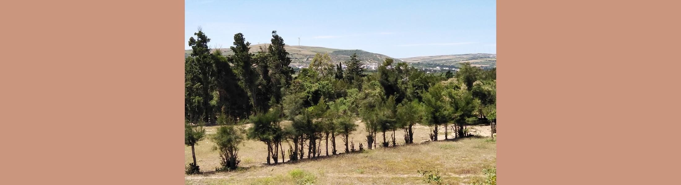 قطعة الارض راس الجبل 1 - بنزرت (طلب العروض عدد 08 لسنة 2020)