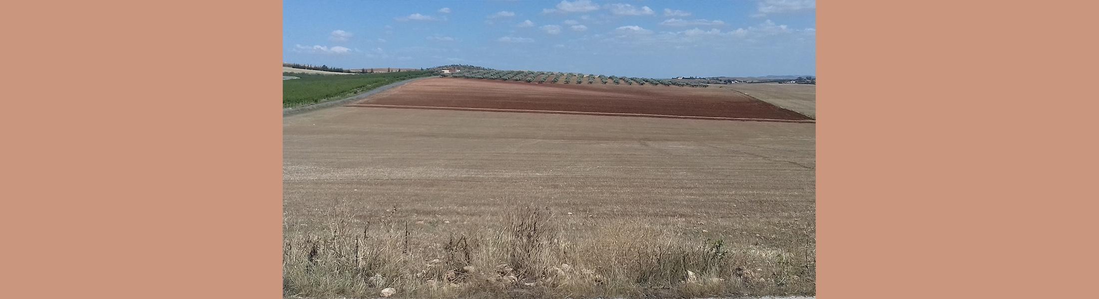 Terrain agricole - Borj El Amri (Avis de location N°01-2021)